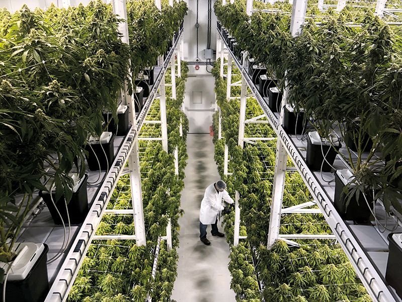 Technological Advancements Affect Cannabis Industry
