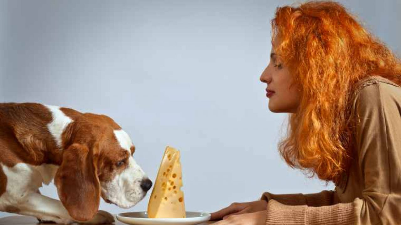 dog feed on cheese