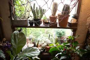 how are water and minerals transported in plants